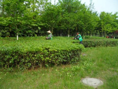 草坪磚內草坪怎樣鋪植管理方法