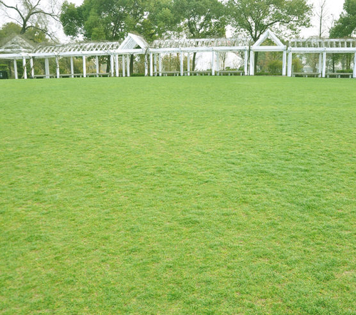 草坪保養的五大管理方法