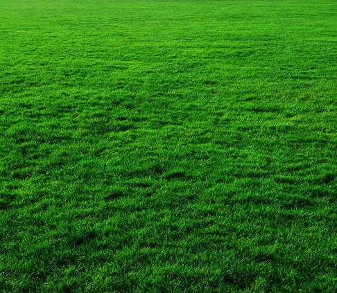 天津綠化公司為您介紹草坪的栽培栽種方法