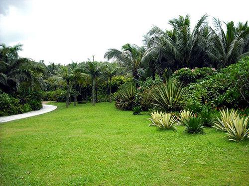 公园草坪.jpg
