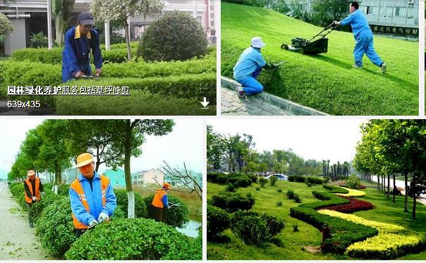 绿化养护 (1).png